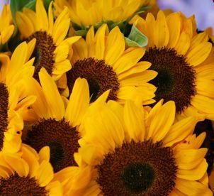 Wedding Flowers In Italy Tuscan Atmosphere